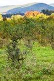 Chaparral an der Bergwiese stockbilder