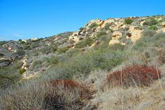 Chaparral in Laguna Canyon, Laguna Beach, CA. Image shows a typical chaparral biome in Laguna Canyon, Laguna Beach, California. Chaparral is a shrubland plant Royalty Free Stock Photo