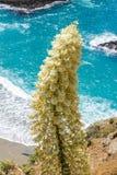 Chaparralyucca op de Vreedzame Kust, Californië royalty-vrije stock afbeeldingen