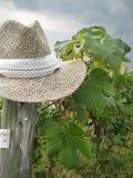 Chapeau dans la vigne Photographie stock