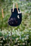 Chapeau de polo d'eau Image libre de droits