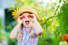 Chapeau de port adorable de petite fille sélectionnant les tomates organiques mûres fraîches en serre chaude Images stock