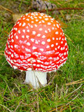 Chapeau de rouge d'écarlate Image stock