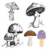Chapeau différent de rouge d'illustration de vecteur de conception de style d'art de champignon de champignon d'agaric de mouche  Images libres de droits