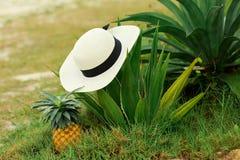 Chapeau et ananas blancs sur l'herbe photos stock