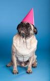 Chapeau s'usant d'anniversaire de crabot de roquet Photo libre de droits