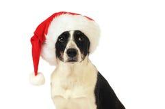 chapeau Santa de crabot Images libres de droits