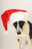 chapeau Santa de crabot Photos libres de droits