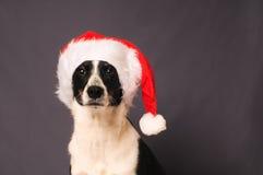 chapeau Santa de crabot Image libre de droits