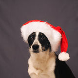 chapeau Santa de crabot Photos stock