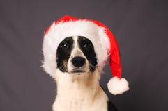 chapeau Santa de crabot Images stock
