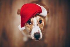 chapeau Santa de crabot Concept de Joyeux Noël et de bonne année PS Photographie stock libre de droits
