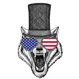 Chapeau supérieur de port animal de cylindre de Wolf Dog Wild Images libres de droits
