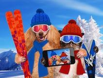 Chapeaux de chat et de chien prenant un selfie ainsi qu'un smartphone Image stock