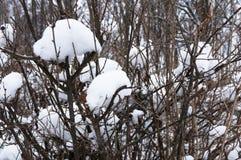 Chapeaux de neige sur des branches d'arbre image stock