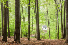 Chapel in beech forest Stock Images