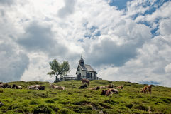 Chapel and Cows Royalty Free Stock Images