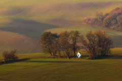 Chapel in the field Royalty Free Stock Photo