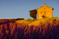 Chapel with lavender field Stock Photography