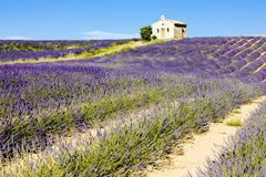 Chapel with lavender field Stock Photo