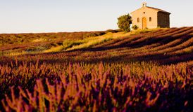 Chapel with lavender field Royalty Free Stock Images