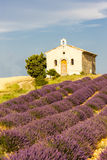 Chapel with lavender field. In Plateau de Valensole, Provence, France Stock Images