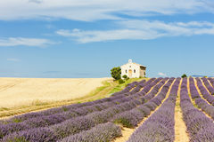 Chapel with lavender field, Provence Stock Photo