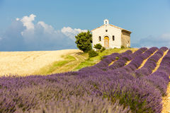 Chapel with lavender field, Provence. Chapel with lavender and grain fields, Plateau de Valensole, Provence, France Stock Photos
