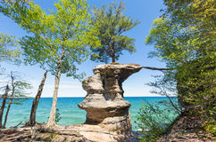 Chapel Rock at Pictured Rocks National Lakeshore, Michigan. Clinging tenaciously to life, this tree on Chapel Rock gets its lifeblood from the mainland by roots stock photos