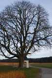 Chapel standing by a tree. A chapel in the forest stands near a tree Royalty Free Stock Photos
