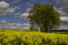Chapel under the lime trees. Old chapel huddling under the lime trees Royalty Free Stock Photography