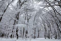 Chapelle de neige Photographie stock
