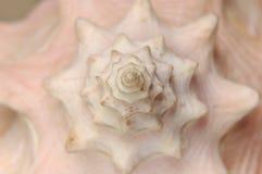Chapitel del Seashell Imagen de archivo