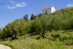 Chaple and Olive orchard Royalty Free Stock Images