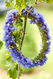Chaplet from blue cornflowers. Hanging on twig with bummble-bee on it Royalty Free Stock Image