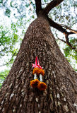 Chaplet on the trees Thai poeple believe in forest. Day time Royalty Free Stock Image