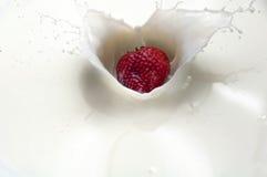 Chapoteo de la fresa en negro Imagen de archivo