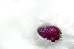 Chapoteo de la fresa en negro Imagen de archivo libre de regalías