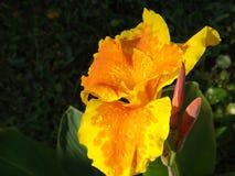 Chapoteo de la naranja Imagen de archivo libre de regalías