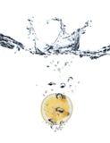 Chapoteo de Lemmon en agua Foto de archivo