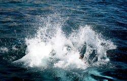 Chapoteo del agua Fotografía de archivo libre de regalías