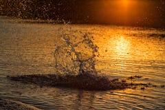 Chapoteo del agua en puesta del sol Imágenes de archivo libres de regalías