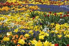 Chapoteo del color Imagenes de archivo