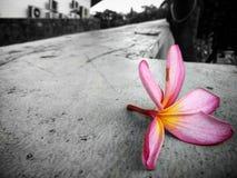 Chapoteo del color Foto de archivo libre de regalías