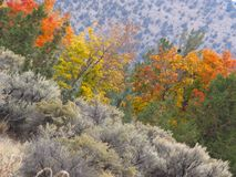 Chapoteo del color en los enebros Imagenes de archivo