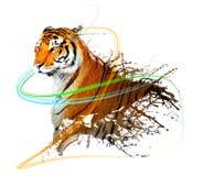 Chapoteo del tigre con los rastros ligeros Imagen de archivo