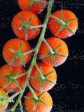 Chapoteo del tomate en agua Foto de archivo libre de regalías