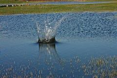 Chapoteo grande creado en un lago Fotografía de archivo
