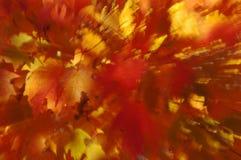 Chapoteo rojo y amarillo del color del otoño Fotografía de archivo libre de regalías