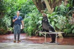 Chapoteo Safari Show Imagen de archivo